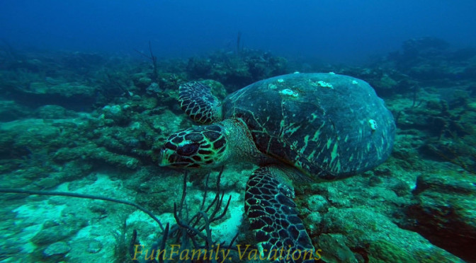 Best Place to see Sea Turtles